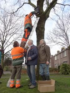 Gemeentemedewerkers plaatsen de vleermuiskasten onder toeziend  oog van Reinder Visser en Hein van der Vliet van Natuurvereniging Gorredijk.