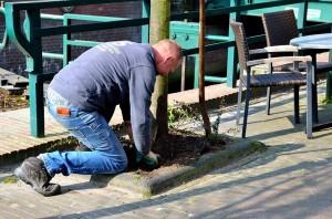 Feitze Dijkstra plant struiken aan de Langewal.