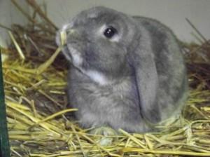 Zaterdagmiddag 31 mei organiseert de Dierenartsencombinatie een themamiddag over konijnengedrag.