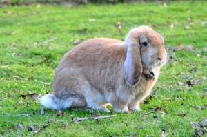 da mei 15 konijn
