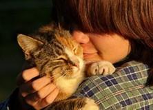 Juni: dierenarts Gorredijk, een katvriendelijke praktijk