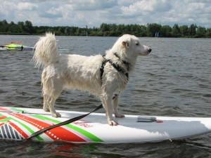Mas op de surfplank.