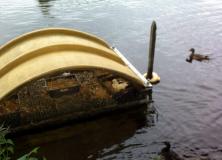 Dode eenden in Gorredijk en Terwispel: mogelijk botulisme