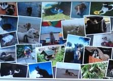 Juli en augustus, zomeracties bij dierenartsencombinatie Gorredijk