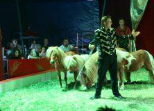 Circus Barani komt naar Gorredijk